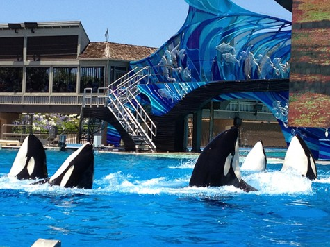 Sea World, San Diego offers great vacation opportunities this summer